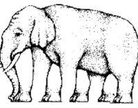 ゾウの足は何本?海外SNSでシェアされまくってる錯視絵
