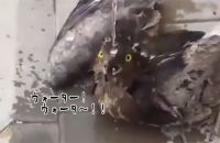 これぞまさしく命の水。暑さで行き倒れていた鳥に水をかけてあげたところ、息を吹き返した(サウジアラビア)
