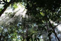 ドローンは地球を救うか?ドローンで植林する新技術が注目される
