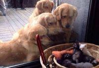 動物たちを見て忘れかけていた優しさと寛容さを取り戻そうとする動きが出始めた
