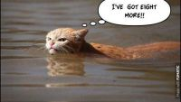 ハリケーンハービーによる洪水の中、キッとした表情で泳ぐ猫が話題に