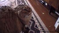 とりあえず嫌がってるのはよくわかった。「NO!NO!NO!NO!」と鳴いている猫