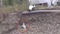 「あっ、あぶない!今助けに行くよ!」崖から落ちた子犬を助けようとする猫