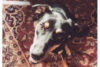 あなたの犬もそうかもしれない!?犬のサリヴァンくんがかかった謎の病気の正体は?