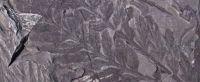 かつて南極では木々が生い茂っていた?南極で2億8000万年前の森の化石を発見(米研究)