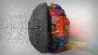 """実験室で培養された""""ミニブレイン(脳)""""が解き明かす人間の独自性(米研究)"""