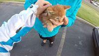 「危ない!ちょっとみんな止まって!」交差点の真ん中の子猫、バイク乗りのお姉さんに助けられる