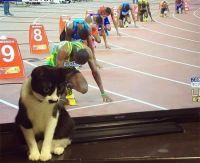 そんな技どこで覚えた?あまりにも背景にマッチングしすぎた猫たちの溶け込みっぷりを見ていこう