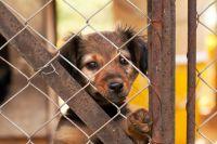 イギリスがEU離脱請求書で「動物は苦痛を感じず、感情もない」という条項を可決し物議をかもす