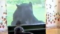窓の外を監視する猫、そして窓の外にはクマーがいた!!
