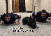 息もぴったり!忠実な警察犬が警官と一緒に腕立て伏せを披露(アメリカ)