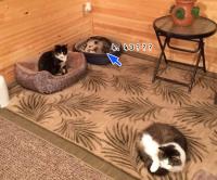 祖母の猫たちに会いに行った。ん?猫にまじって1匹だけ別の動物が。祖母は数年間全く気づかず猫と思って世話してた。