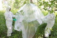 植物の持つ恐ろしさをまざまざと実感。世界最恐クラスの猛毒植物の取り扱い方法がバイオハザード(カナダ)