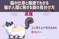 猫は雄弁。尻尾や仕草、鳴き声で多くを語る。「猫語」を理解するためのイラスト