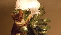 破壊神が降臨した!クリスマスを守り切れなかったご家庭の様子をご覧ください