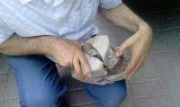 これどんなオーパーツ?銅線がぐるぐる巻きになっている石が出土。2万年前に変圧器があったんかい!と騒ぎに(コソボ)