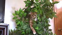 家猫たちのマストアイテム、「キャットタワー」の効用について調べてみた