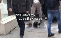 トルコクオリティ。地下鉄のエスカレーター前に座り込み、大勢の通勤者たちに踏まれそうになりながらも絶対にどかない猫