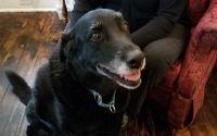 10年前に行方不明となった犬。あきらめかけていた家族の元に「保護してます」の連絡が!(アメリカ)