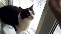 寒さを感じた時、猫はどう反応するのか?バンザイキャットのプジークさんの場合
