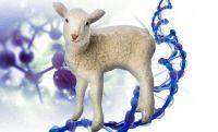 羊と人間のキメラ。人間の細胞を持つヒツジの胎児が誕生(米研究)