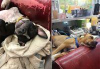 いらなくなったソファで犬たちを幸せにできる。アメリカで注目を集めている「不要のソファを動物たちに寄付」プロジェクト