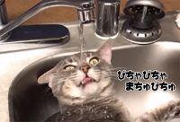 蛇口から直接飲むのまではわかるが...猫の水の飲み方がいろいろおかしい件