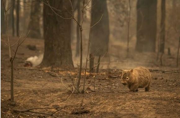 火事 現在 オーストラリア 森林火災がアマゾンやオーストラリアで発生した原因は?消火方法はあるのか