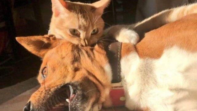 噛ま れ た 猫 に 飼い