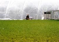 植物工場、震災地で威力 雇用創出や活性化に効果(岩手県陸前高田市、グランパ)