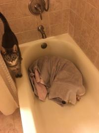 犬と猫の飼い主「雷が鳴り響いた日の、深夜のバスルームの様子がこちら」