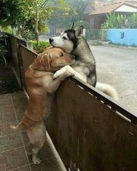 「よその犬が脱走して、うちの犬に会いに来た…」愛を感じる写真