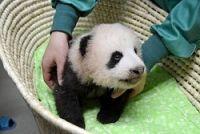 <上野動物園>パンダ赤ちゃん、体長47.9センチ