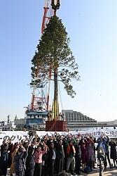 <クリスマスツリー>神戸の公園に「世界一」 高さ30m超