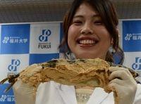 <福井伝統保存食>「へしこ」塩分大幅カットに成功