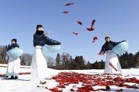 <大寒>銀世界に紅色映え 新潟・トウガラシの「雪さらし」