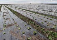 <諫早干拓>営農者が開門請求へ 賠償提訴の2農業生産法人