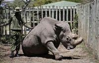 <キタシロサイ>最後の雄が死ぬ ケニア、雌は2頭残るのみ