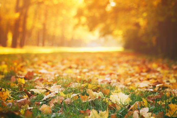 「秋冬 写真」の画像検索結果