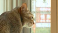 猫、ついて行ってイイですか? 『どうぶつピース!』新企画