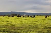 中国はなぜオーストラリアの農地を買いあさっているのか―米メディア