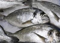中国系男性が釣った魚をネット販売、自宅の冷蔵庫に3000匹、出頭命令出される―米華字紙
