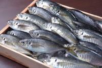 意外!?日本では大人気なのに韓国ではほとんど食べられない魚=韓国ネット「味はどうなの?」「韓国にないのが残念」