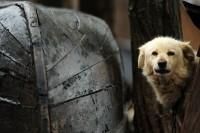 韓国の犬肉農場で救助された犬100匹、海を超え米国に渡る=「牛鶏豚は食用として認められている理由は何?」―韓国ネット
