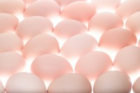 「殺虫剤卵、1日126個食べても問題なし」韓国政府の発表にネットは割れる=「ふざけてる?」「確かに、今まで卵で死んだ人など見たことない」