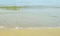 日本の幼稚園児が遊んでいった海岸が前よりもきれいに!現地ユーザーが絶賛―香港