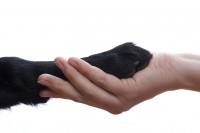 中国などアジア諸国に「犬や猫の肉の売買やめよ」、米下院で決議案―米メディア