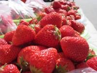 日韓がイチゴの品種争奪戦、日本側の損失は5年で220億円か―台湾メディア