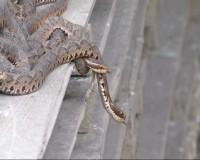 生きたヘビを初めて日本に輸出、計200キロ―淅江省