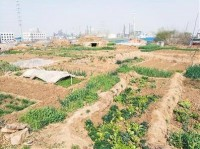 漢の武帝が建てた宮殿が今ではネギ畑に!「こんなことになるなんて」と住民嘆く―陝西省西安市